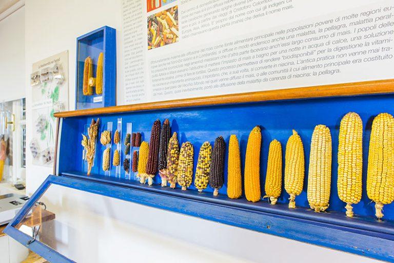 LA STORIA DELL'AGRICOLTURA IN MOSTRA